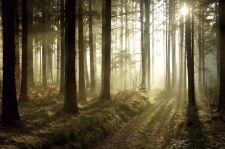 Do 11 kwietnia zakaz wstępu do lasów i parków narodowych