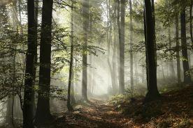 Miejska zieleń chroni przed astmą