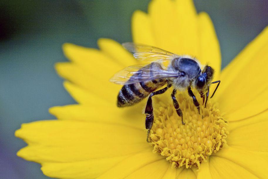 Alergie na jady owadów - diagnostyka i leczenie