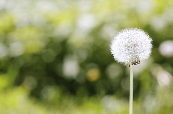 Alergia wziewna - kiedy odczulanie jest skuteczne?