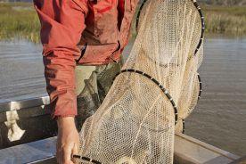 Niebawem szczepionka dla uczulonych na ryby
