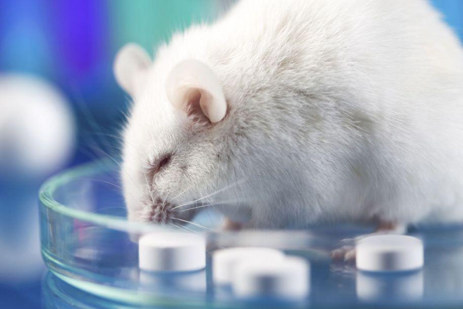 Zastosowanie chitozanu we wspomaganiu regeneracji nerwów