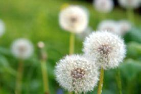 Za i przeciw swoistej immunoterapii alergenowej