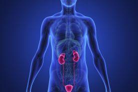 Adipocytokiny w przewlekłej niewydolności nerek