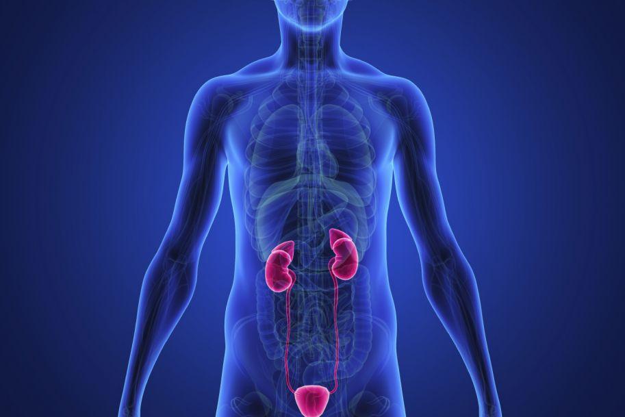 Nawracające zakażenia układu moczowego w praktyce lekarza rodzinnego – zasady diagnostyki i terapii