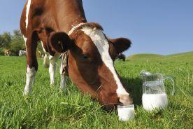 Alergia na białko mleka krowiego