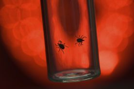 Borelioza z Lyme