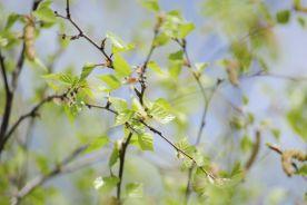 Toksynochłonne rośliny