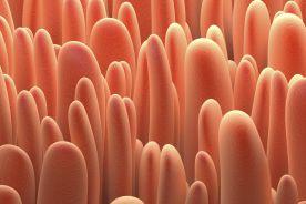 Leki biologiczne i biologiczne biopodobne w gastroenterologii szansą na zwiększenie dostępności leczenia