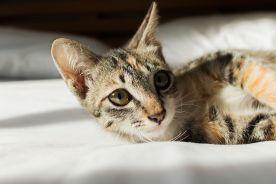 Domowe koty tyją jak ludzie