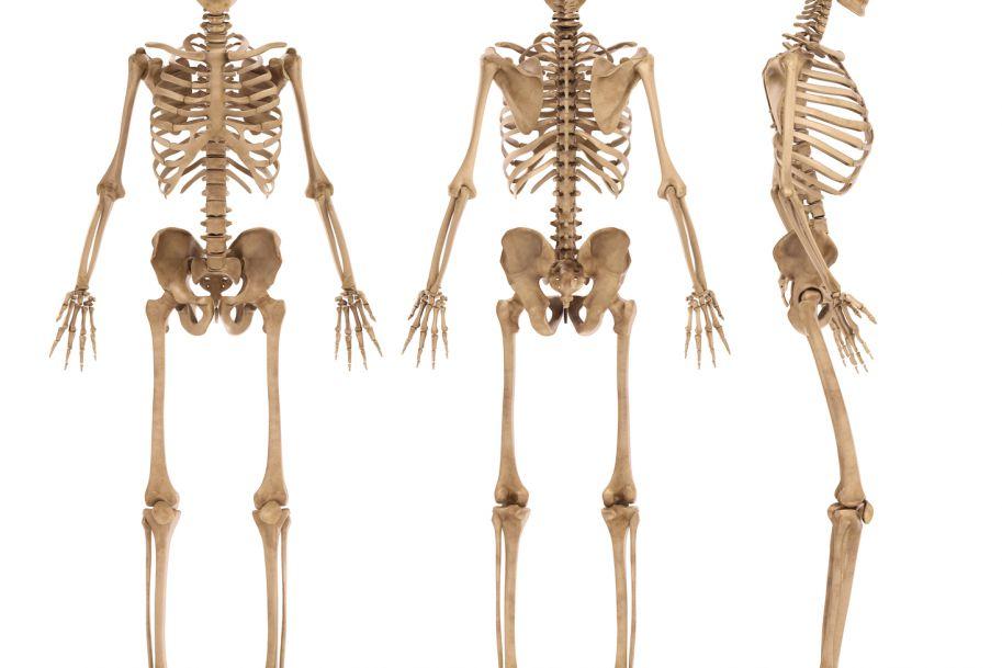 Sztuczna kość – od pomysłu do komercjalizacji