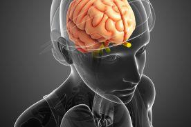 Leworęczny mózg