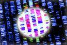 Genetycznie uwarunkowane choroby skóry - przegląd wybranych genodermatoz*