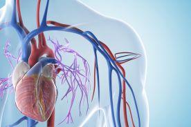 """Konkluzje z V Konferencji """"Powikłania w chirurgii naczyniowej i endowaskularnej"""""""