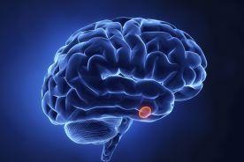 Czym są neurony różane?