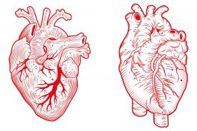 Powstała superdokładna mapa serca