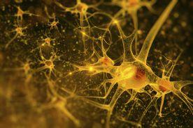 Neurosarkoidoza – obraz kliniczny, diagnostyka i leczenie