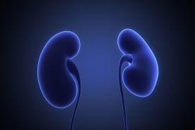 Przezskórna denerwacja nerek – kwalifikacja chorych do zabiegu w świetle aktualnych wytycznych Europejskiego Towarzystwa Nadciśnienia Tętniczego i Europejskiego Towarzystwa Kardiologicznego (ESH/ESC)