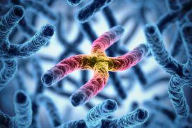 Zespół łamliwego chromosomu X i choroby FMR1-zależne – objawy kliniczne, epidemiologia i podłoże molekularne choroby