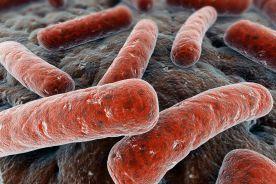 Zakażenie Clostridium difficile u pacjentów z nieswoistymi zapalnymi chorobami jelit