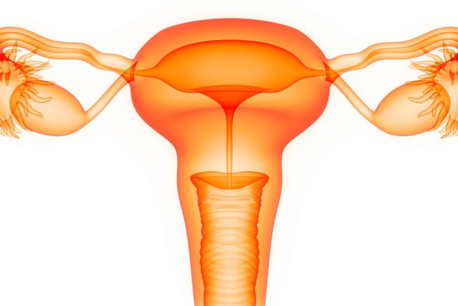 Kontrowersje dotyczące współczesnych algorytmów leczenia raka endometrium