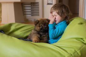 Alergia wziewna, która występuje w domu – roztocza kurzu domowego