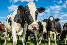 Alergia pokarmowa na białka mleka krowiego (ABMK) – co nowego w 2017?