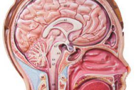 Nowotwory przewodu pokarmowego a przerzuty do mózgu