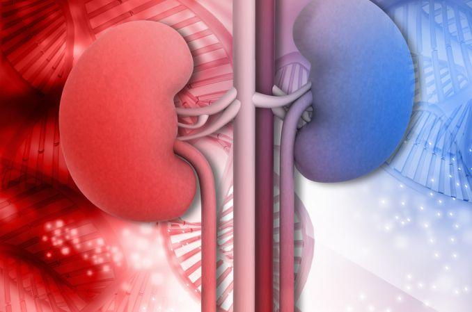 Problemy związane z przeszczepianiem nerek u pacjentów z dziedzicznymi chorobami nerek