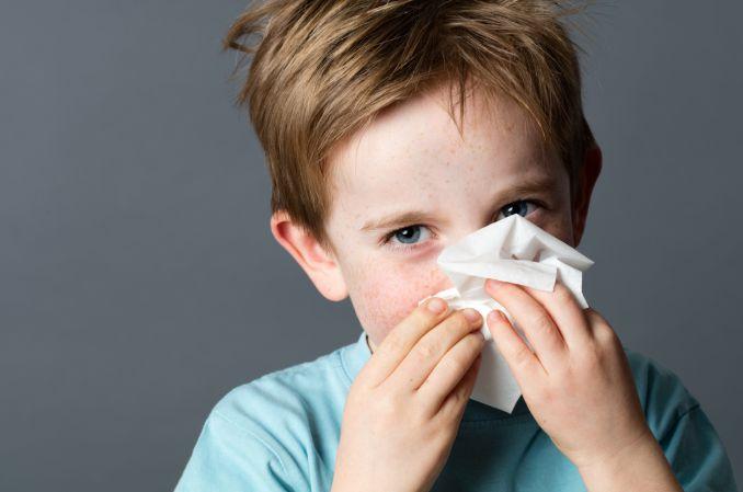 Donosowy proszek celulozowy w łagodzeniu objawów alergii na roztocze kurzu domowego Der p1 oraz Der f1