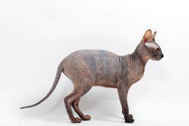 Czy należy zrezygnować z posiadania zwierzęcia? I czy może są hipoalergiczne psy i koty?