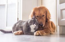 Czy alergia na sierść zwierząt stanowi istotny problem? Co jest najczęstszym alergenem?