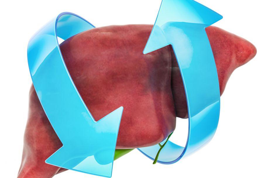 Konsekwencje uszkodzenia wątroby oraz znaczenie sylimaryny w regeneracji tego narządu