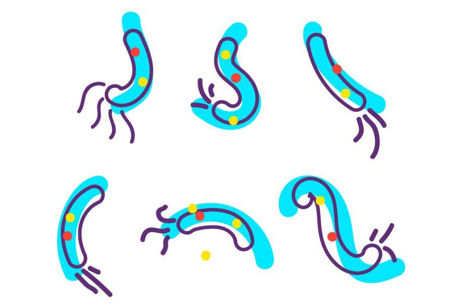 Zastosowanie probiotyków w gastroenterologii