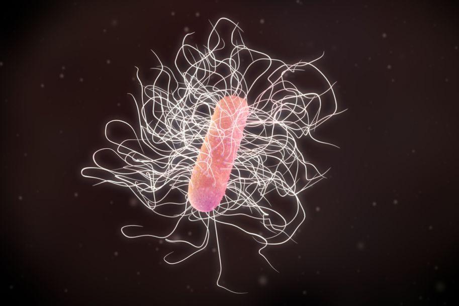 Leczenie infekcji Clostridium difficile w świetle najnowszych wytycznych