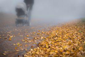 Lekarze kontra smog – przełomowe badanie