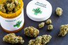 Medyczna marihuana: zyskali narkomani?