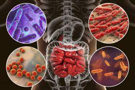 Czy możemy namnożyć swój własny mikrobiom jelitowy? Rola arabinogalaktanu i laktoferyny (Fibraxine)