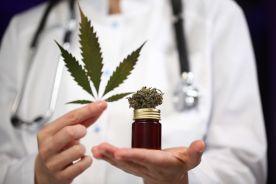 Kannabinoidy w leczeniu bólu w 2019 roku, co wiemy, a czego jeszcze powinniśmy się dowiedzieć