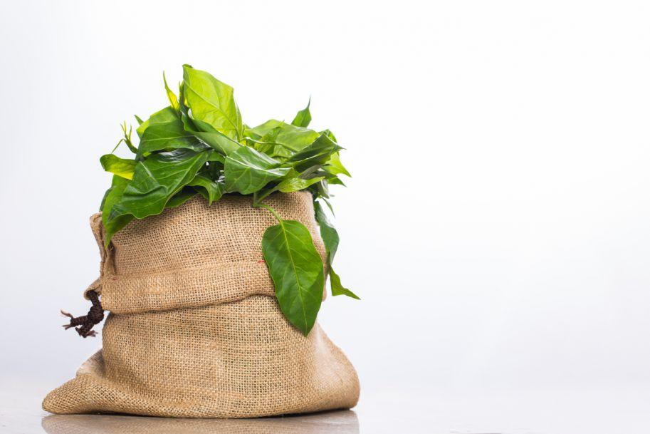 Rola preparatów ziołowych, na przykładzie gurmaru, w utrzymaniu prawidłowej kontroli metabolicznej w cukrzycy i w stanie przedcukrzycowym