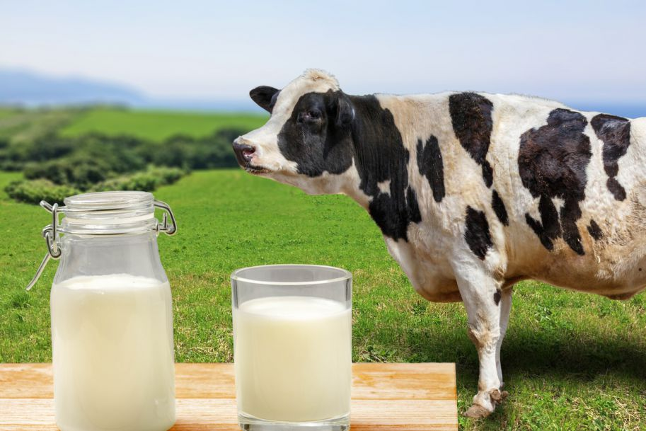 Alergia na białka mleka krowiego – diagnostyka, zasady prowokacji pokarmowej i leczenie