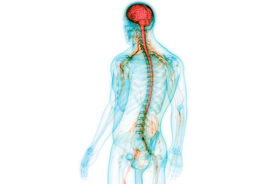 Rola witamin z grupy B w leczeniu schorzeń neurologicznych. Synergistyczne oddziaływanie witamin B1, B6 i B12 na układ nerwowy