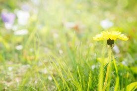 Skuteczne leczenie alergicznego nieżytu nosa w szczycie sezonu pylenia – zadanie trudne? Wykonalne?