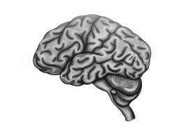 Co piąty nowotwór mózgu związany z nadaktywnością mitochondriów