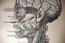 Nazistowski atlas anatomiczny nadal używany przez chirurgów